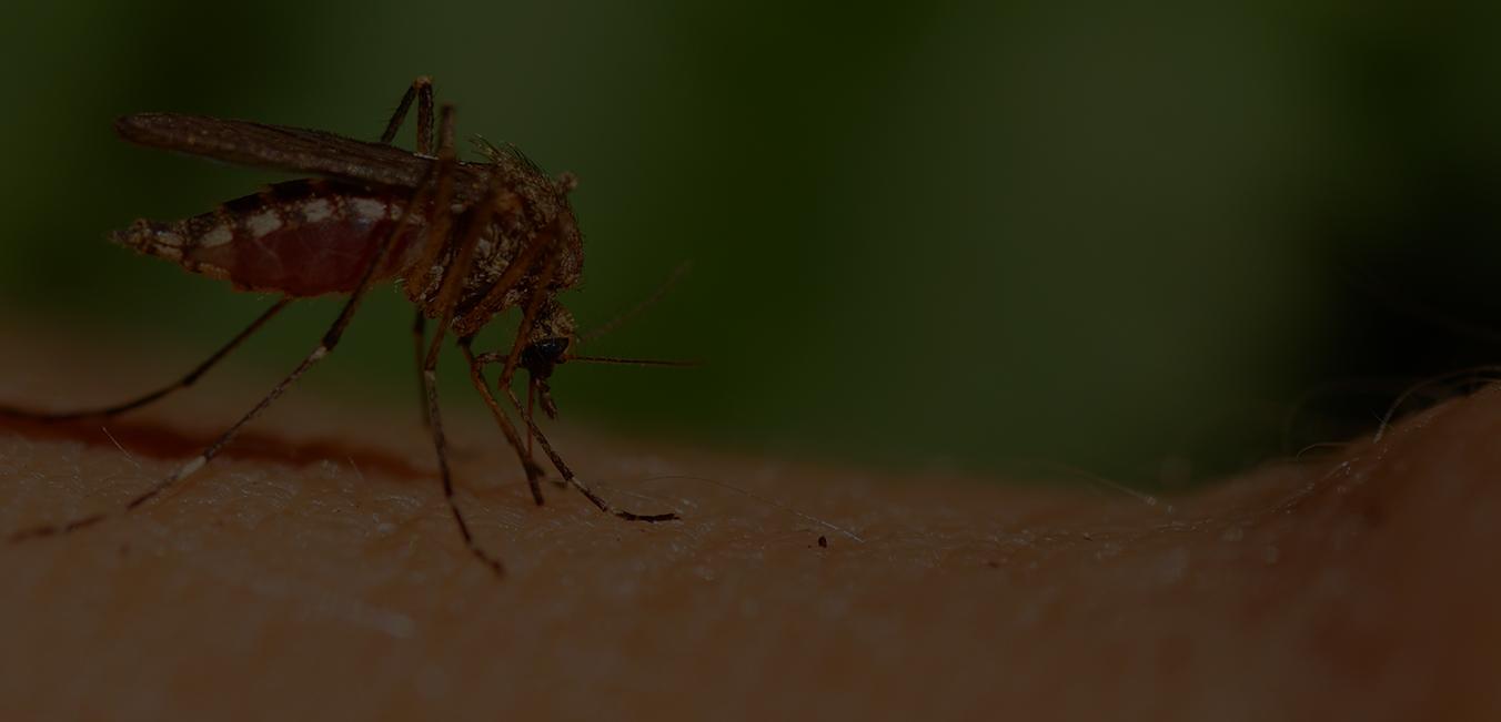 Mosquito Control Houston, Mosquito Control Dallas