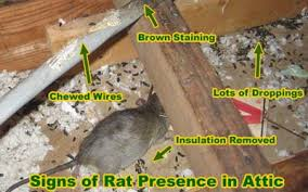 Rodent Control In Prosper Tx Free Your Home Of Invaders