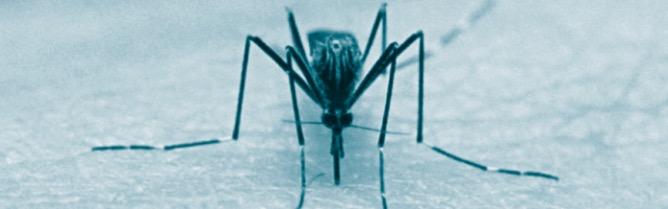 mosquito-control-prosper-tx