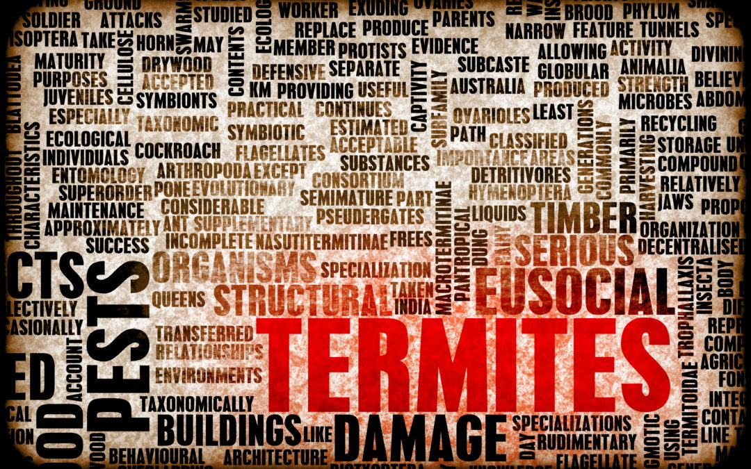 Termite Treatment In Prosper, TX: Signs Of A Termite Infestation