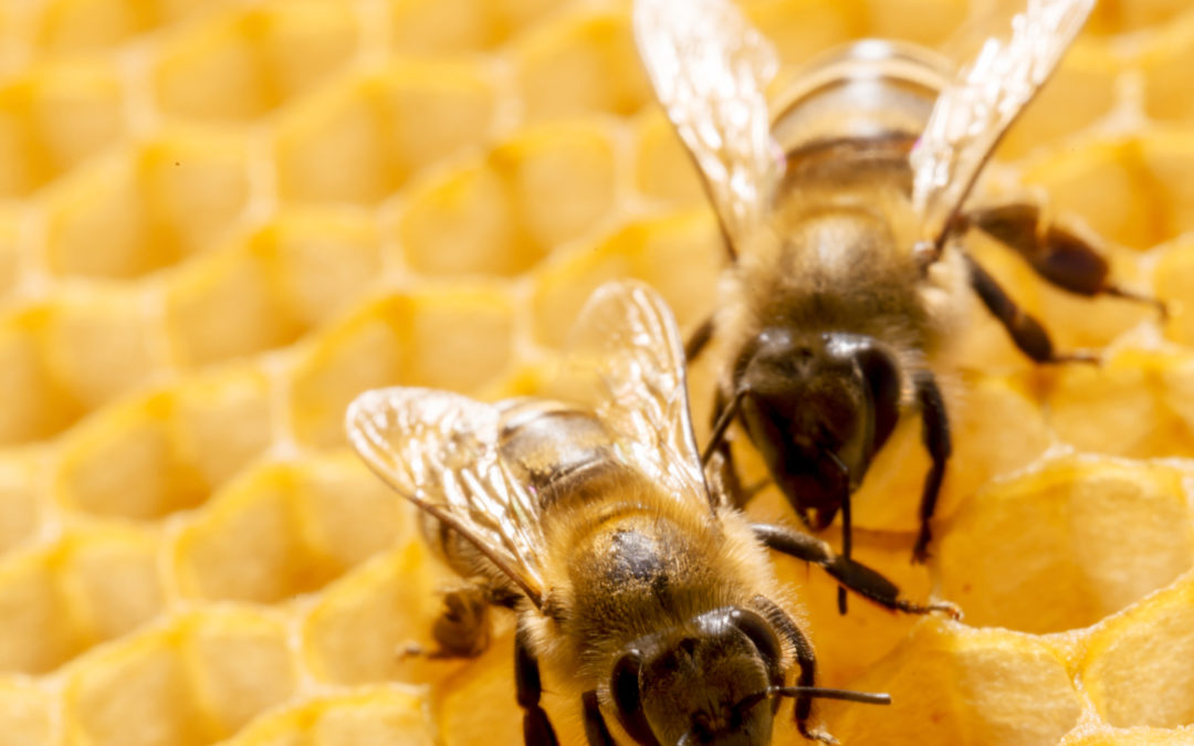 Bee Removal In Prosper, TX: Why You Need Professional Help