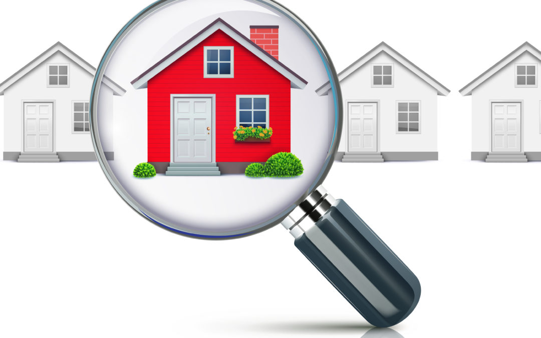Termite Inspection In Celina, TX: Why You Need A New Home Inspection