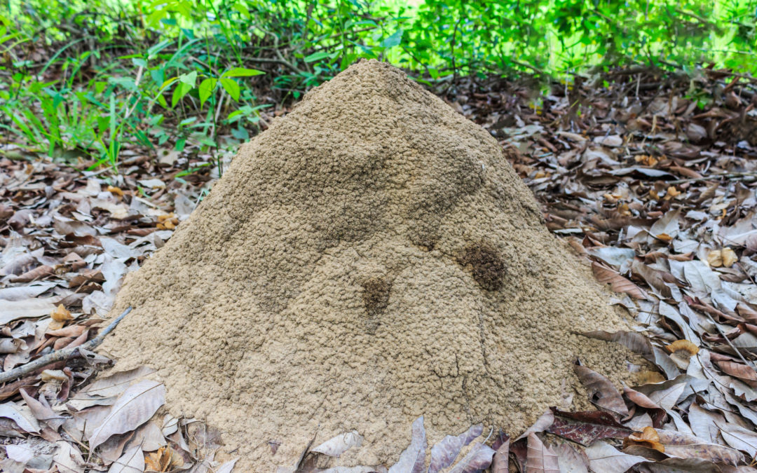 Termite Treatment In McKinney, TX: Watch For Termites This Winter