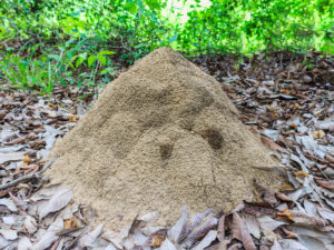 termite treatment mckinney tx