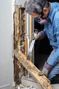 termite inspection mckinney tx