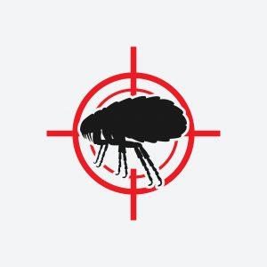 flea infestation mckinney tx