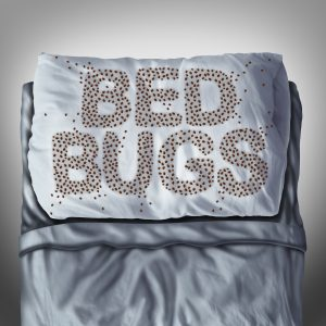 how to kill bed bugs mckinney tx