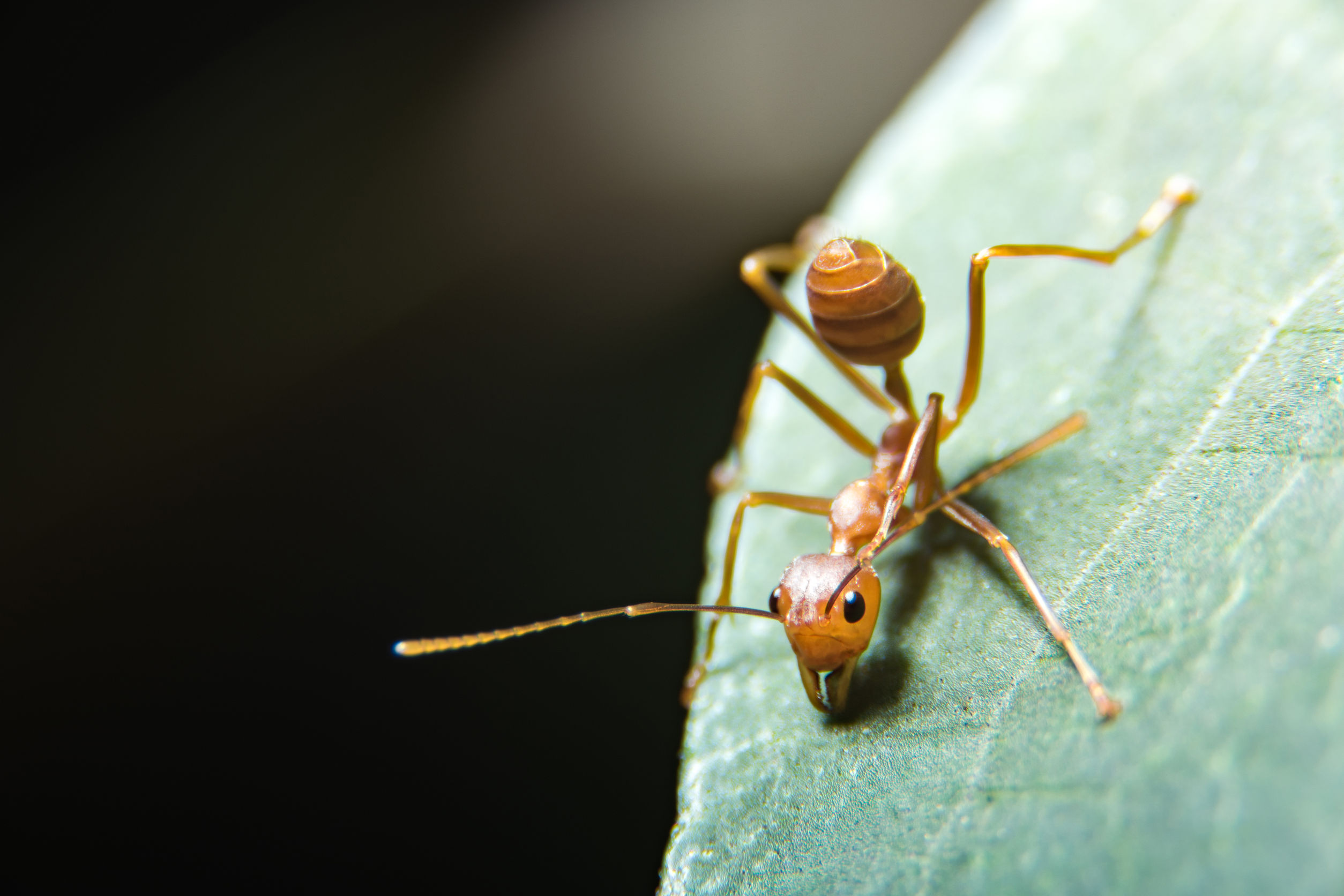 Fire Ant Service In Cypress